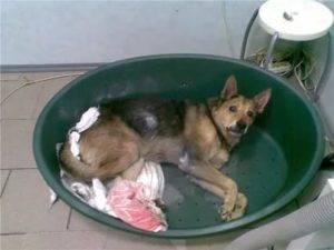 Почему собака забивается в угол. почему собака прячется в темное место: подробный разбор проблемы