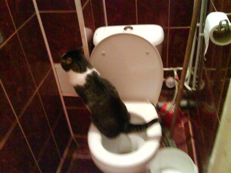 Как можно дома помочь коту при запоре: что дать питомцу для выздоровления