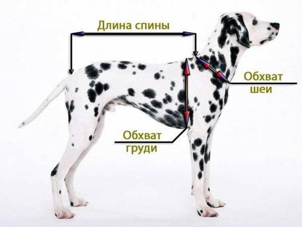 Как выбрать шлейку для собаки и подобрать по размеру