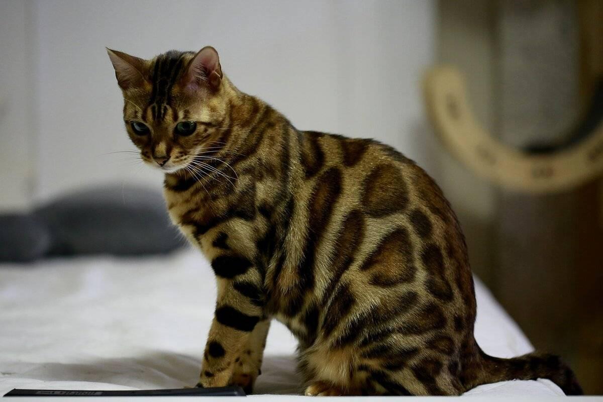 Какую породу кота выбрать - наши домашние друзья