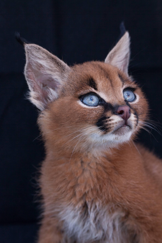 Фото самых красивых котов в мире: топ 10 пород