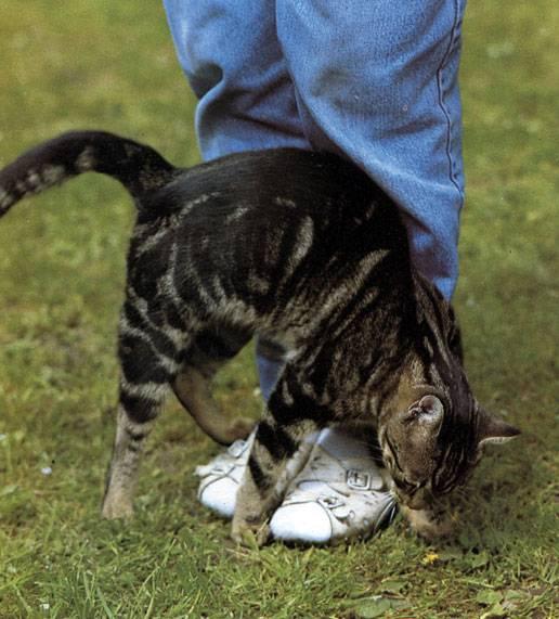 Почему кошки мнут лапами