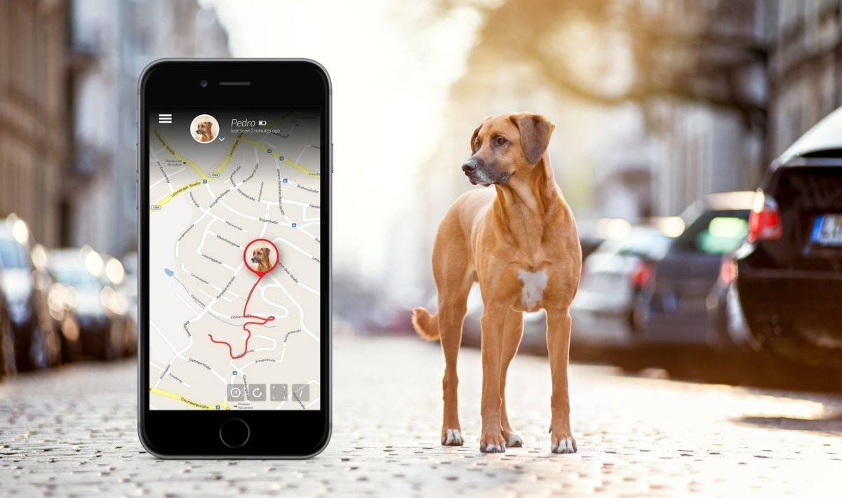 Трекер для собак gps - как выбрать лучший ошейник другу