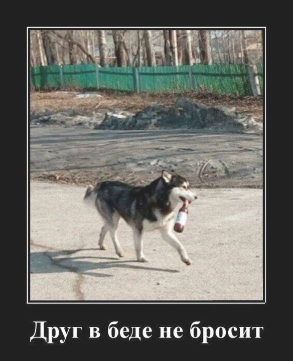 Самые умные и преданные породы собак — топ-10 | все о собаках