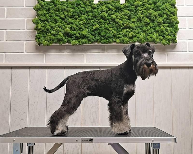 Что такое тримминг собак, зачем он нужен и можно ли выполнить в домашних условиях