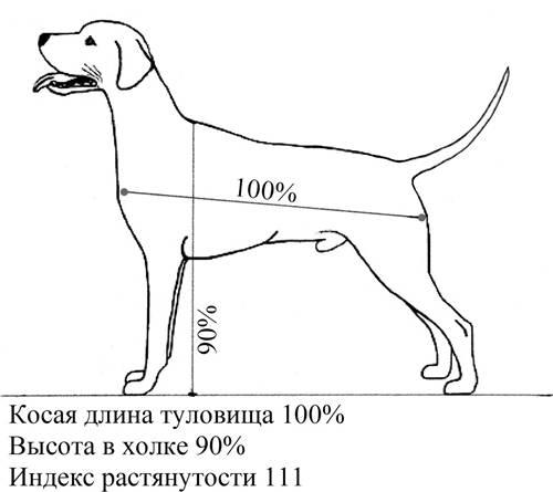 Где у собаки холка и для чего она нужна, как измерить рост собаки и почему это важно