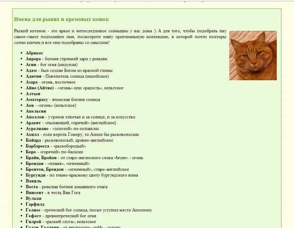 Как назвать черного кота или кошку? список красивых и необычных имен, которыми можно назвать котят-мальчиков и девочек черного цвета
