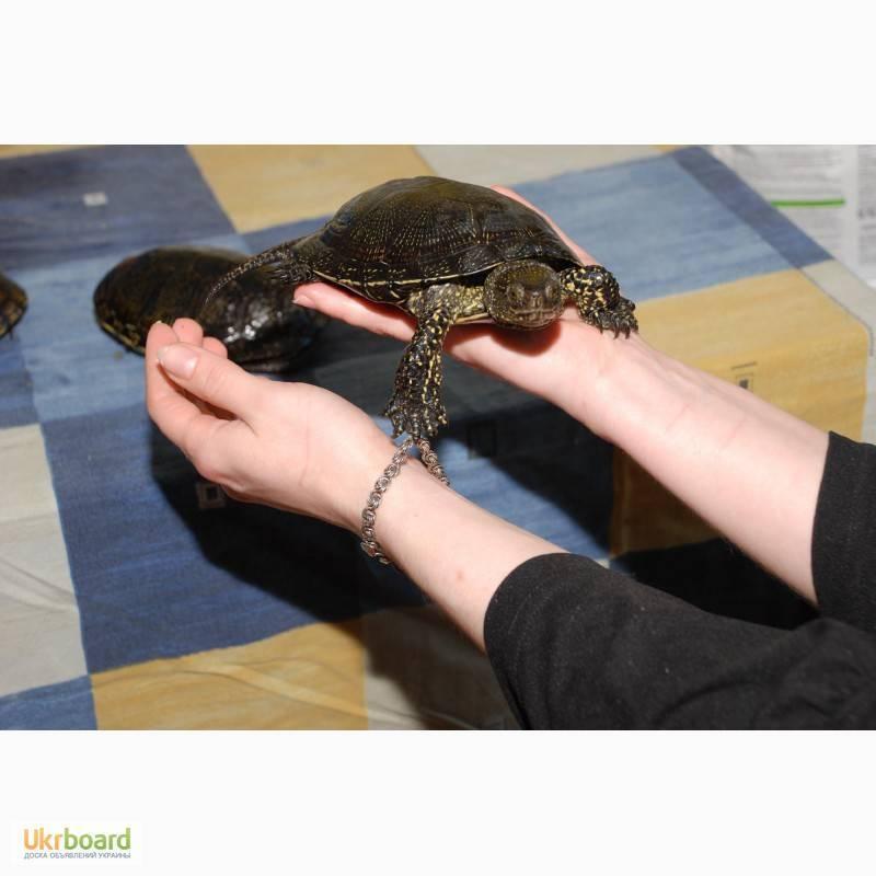 Как ухаживать за домашней черепахой — содержание, кормление и здоровье черепашки | вокруг нас