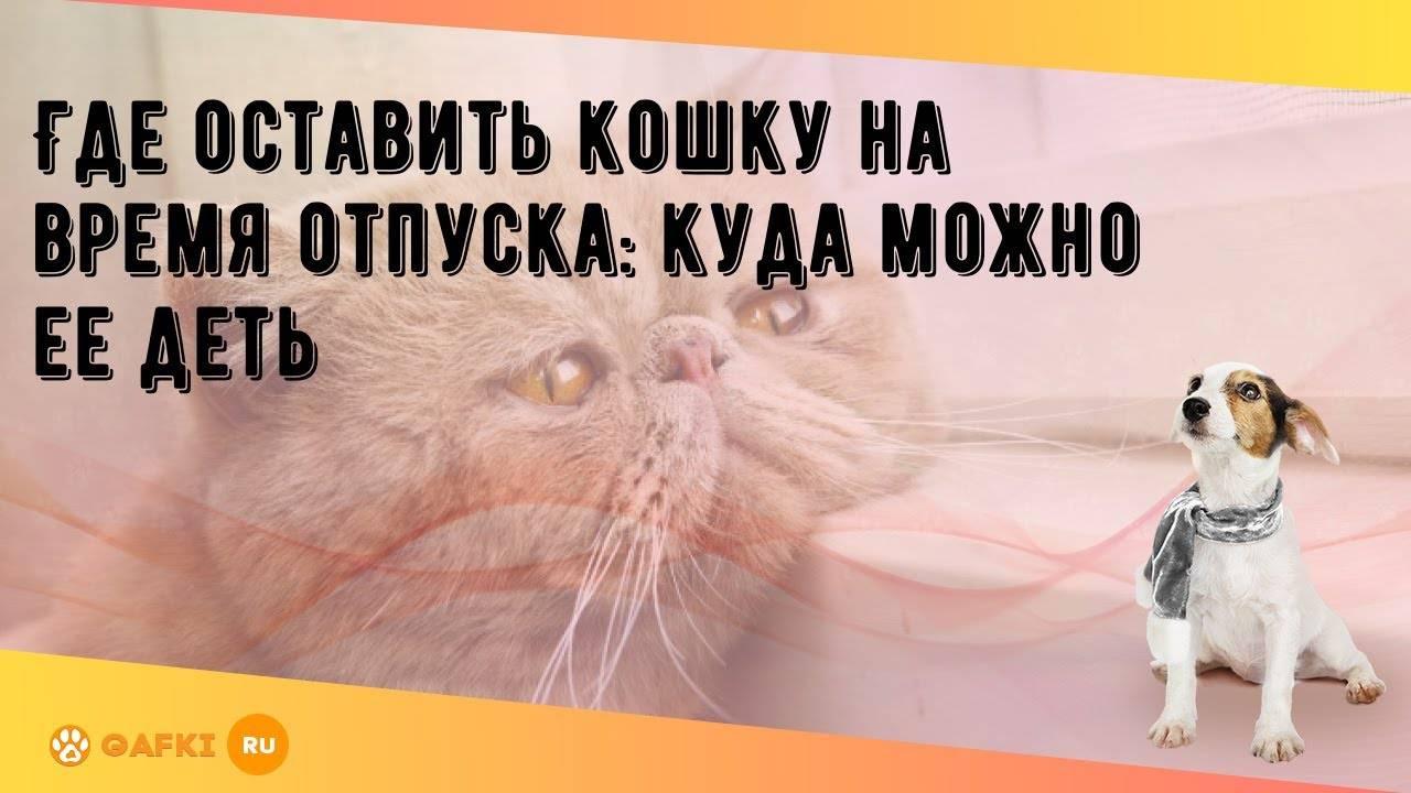 Где оставить кота на время отпуска – статьи – арриво