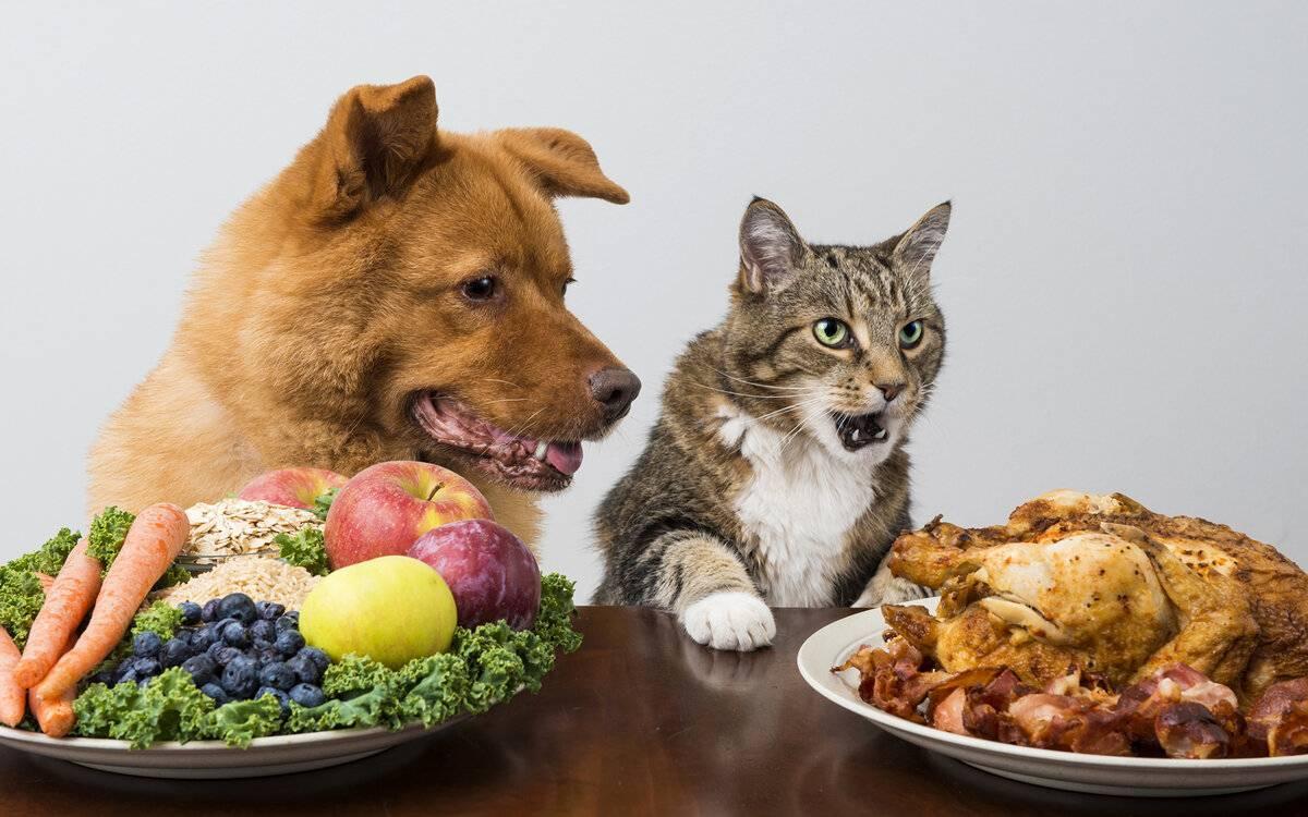 Плохой или пропал аппетит у собаки: причины и что делать