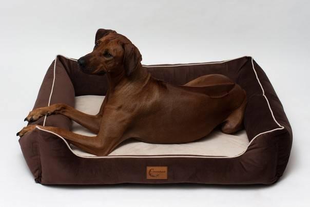 Лежанка для собаки: варианты подстилок для собак разных размеров