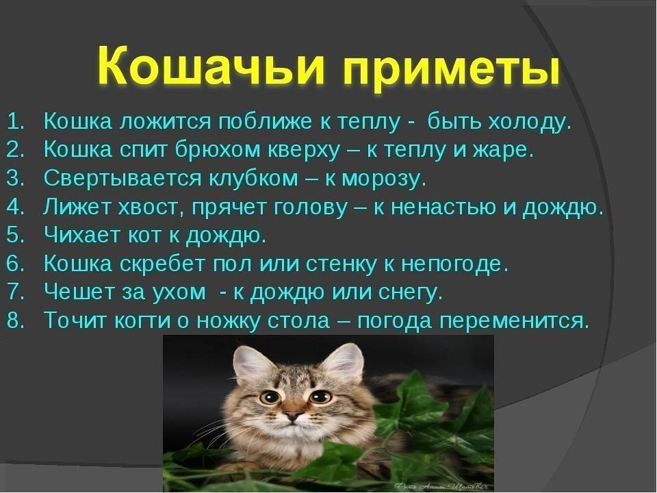 Из-за чего кошка может беспокойно себя вести?