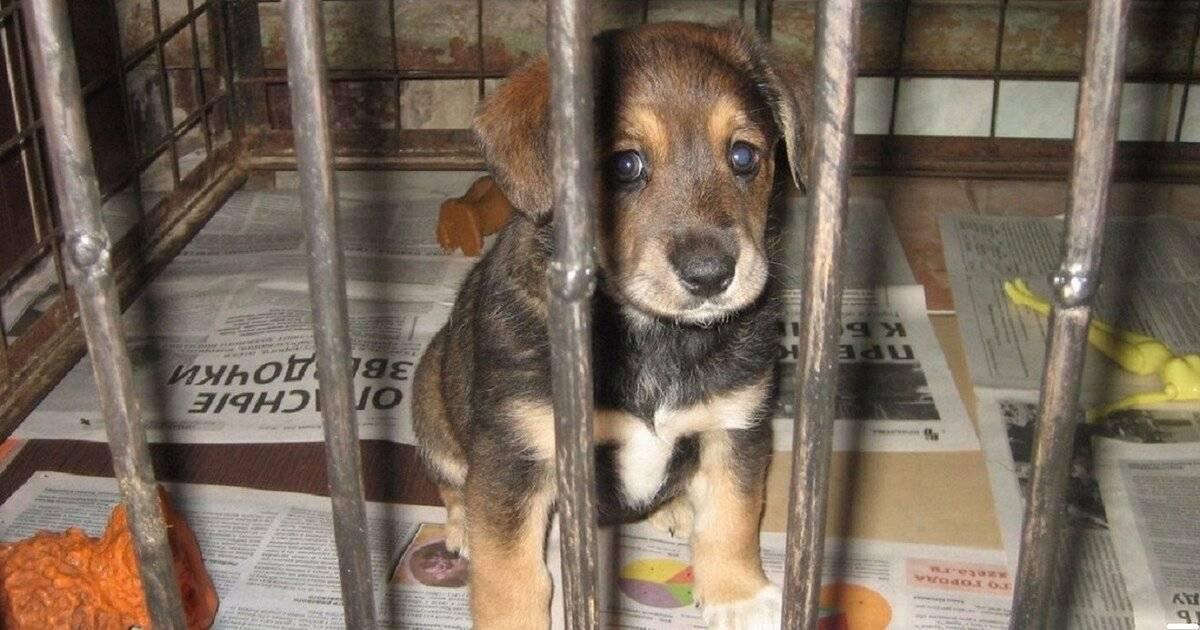 Собачий приют для бездомных собак: назначение, за какие деньги существует