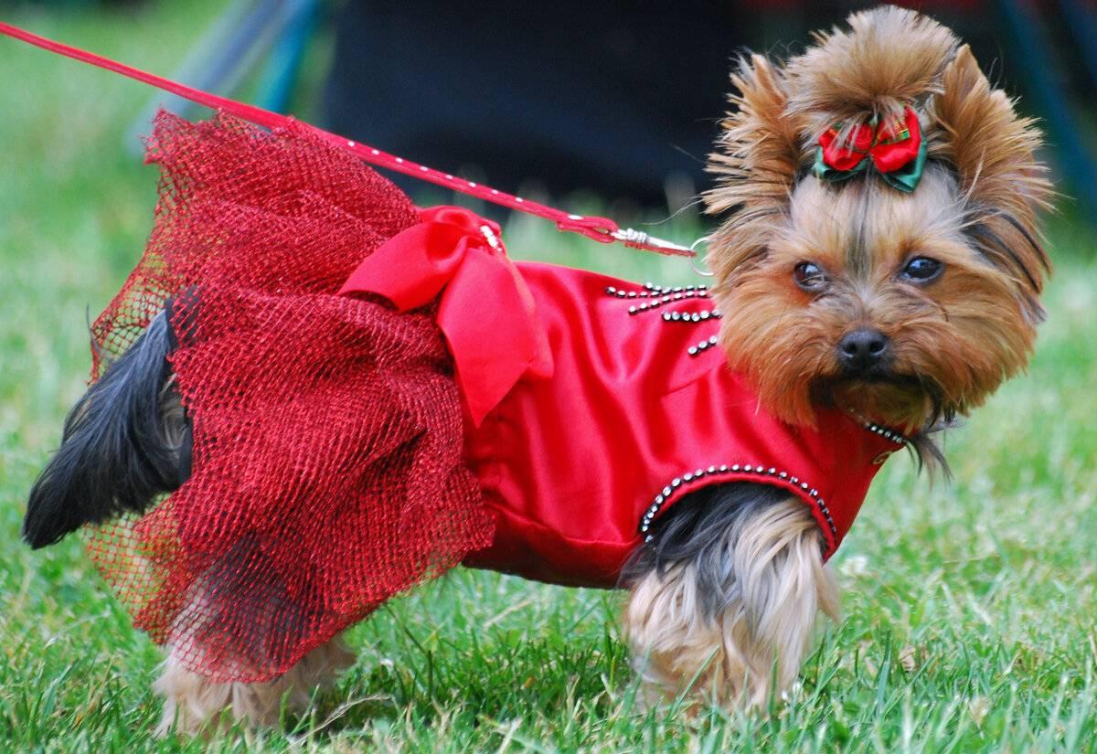 Нужна ли собакам одежда? :: инфониак