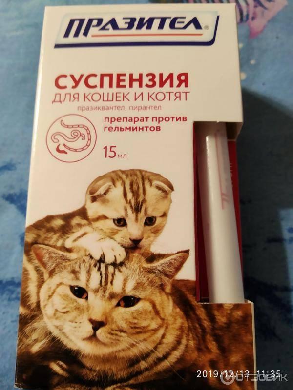 Суспензия «празител» для кошек и котят: инструкция по применению