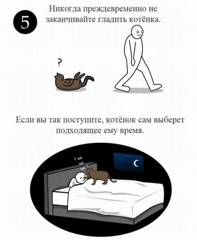 Как правильно гладить кошку: подробная инструкция от пользователей сети