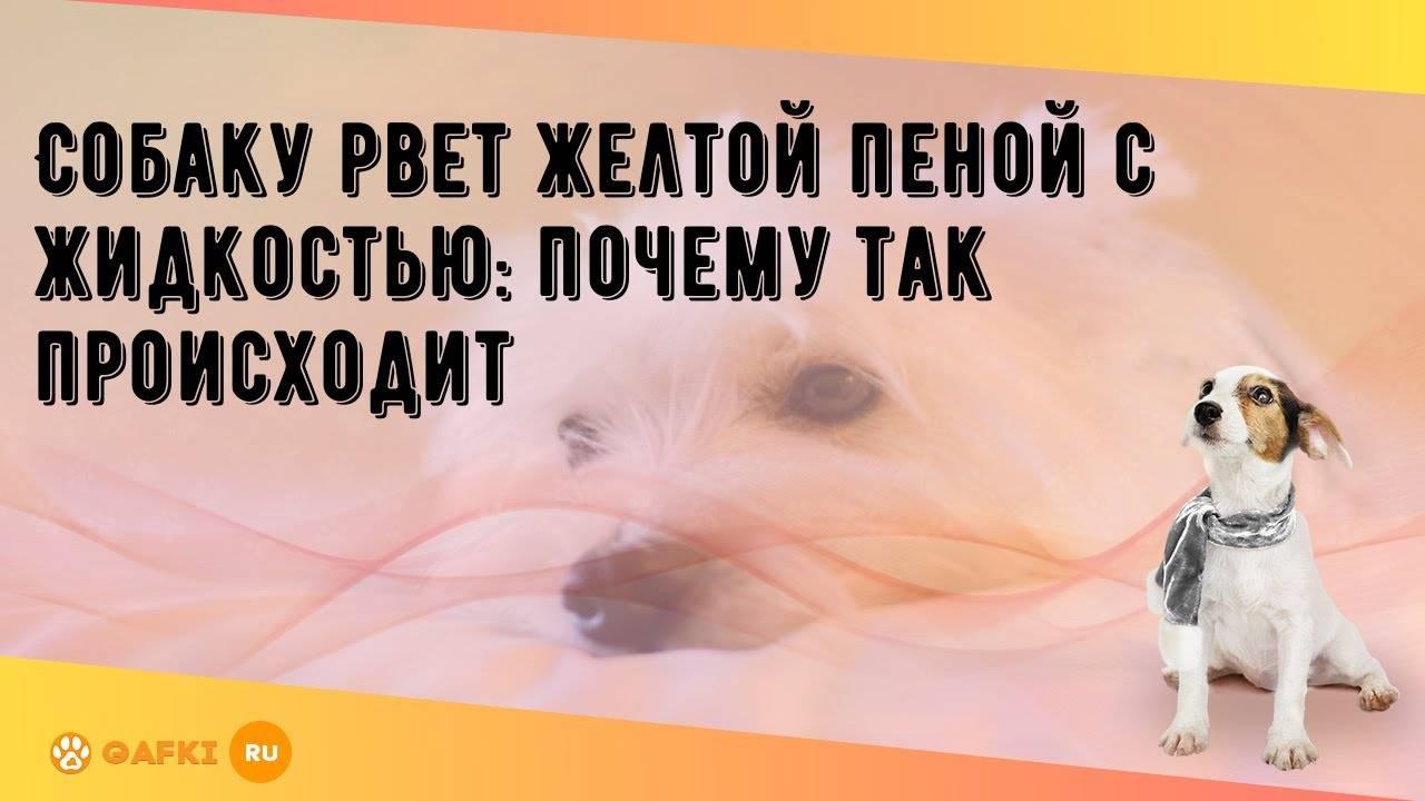 Собаку рвет желтой пеной