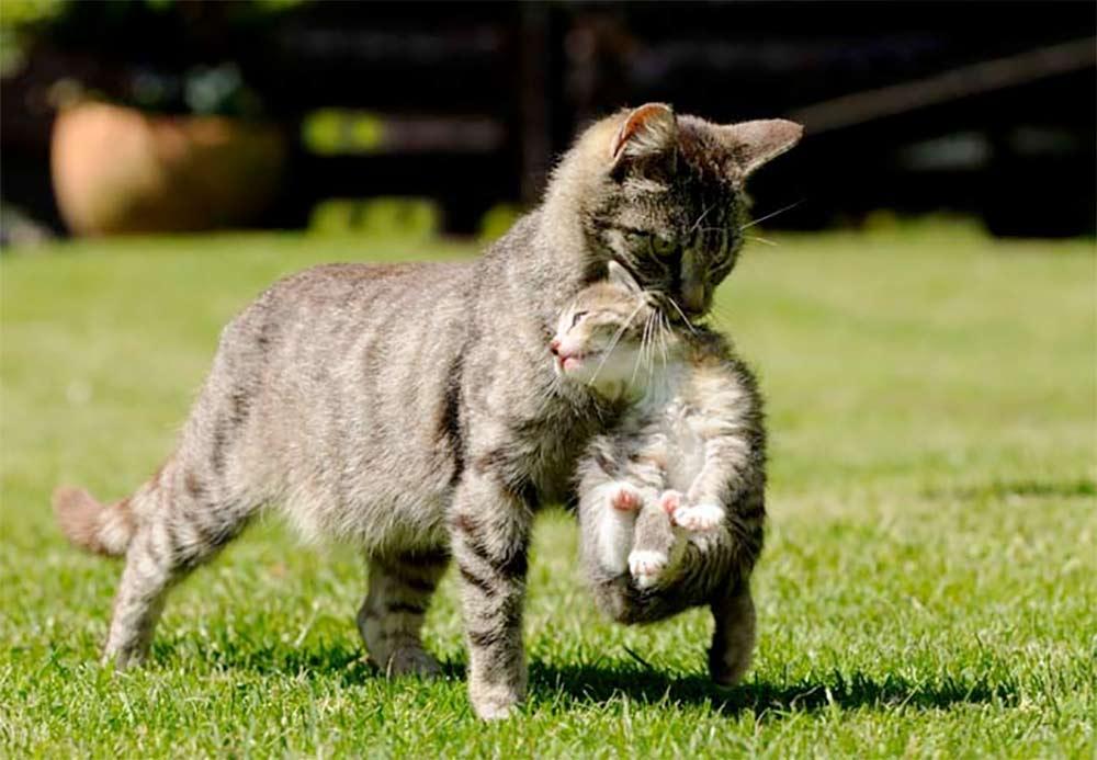 Почему кошка переносит котят в другое место