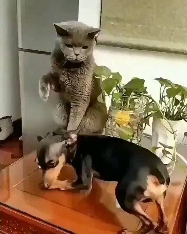Умеют ли собаки и кошки смеяться - gafki.ru