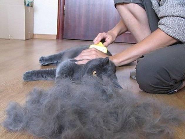 Как избавиться от кошачьей шерсти в доме