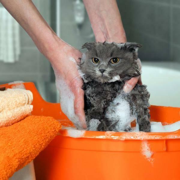 Что нужно для котенка: список покупок для нового питомца