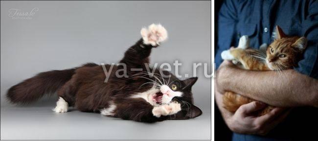 Эпилепсия у кошек. причины, симптомы и лечение