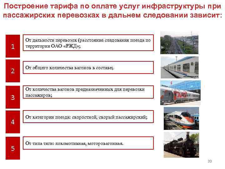Правила перевозки животных в разных видах транспорта