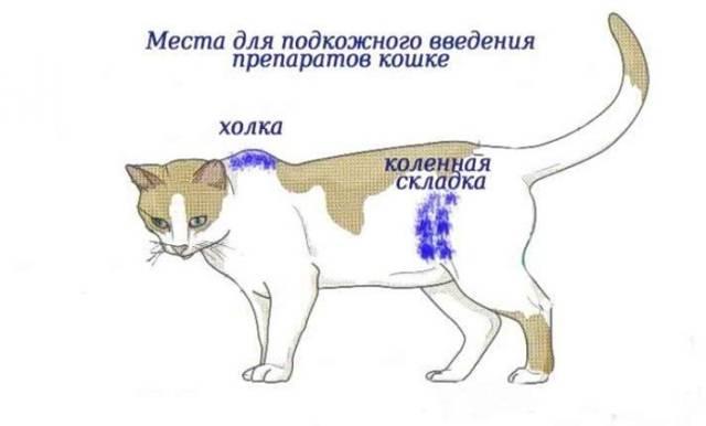 Мультифел 4 для кошек