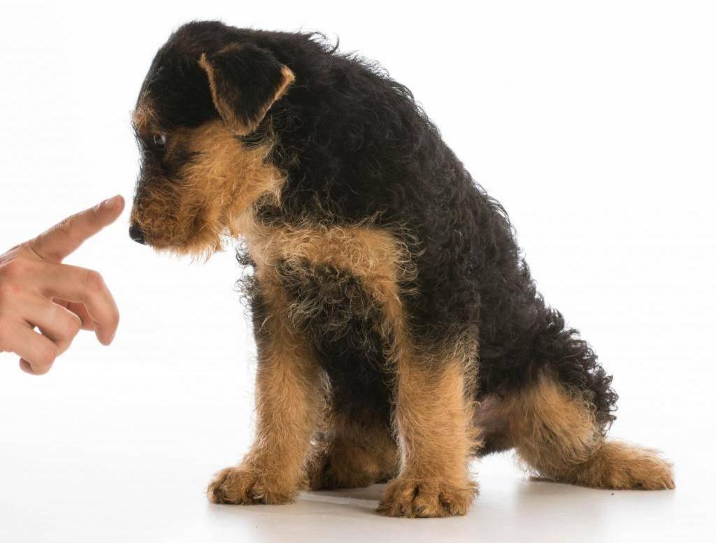 Как правильно наказывать собаку за плохое поведение, а чего нужно избегать в этом деле