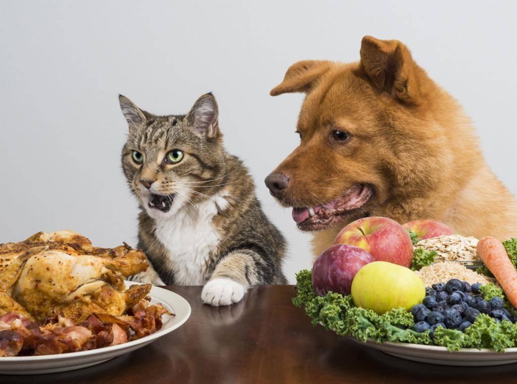 Почему собаке нельзя давать свинину: причины и последствия