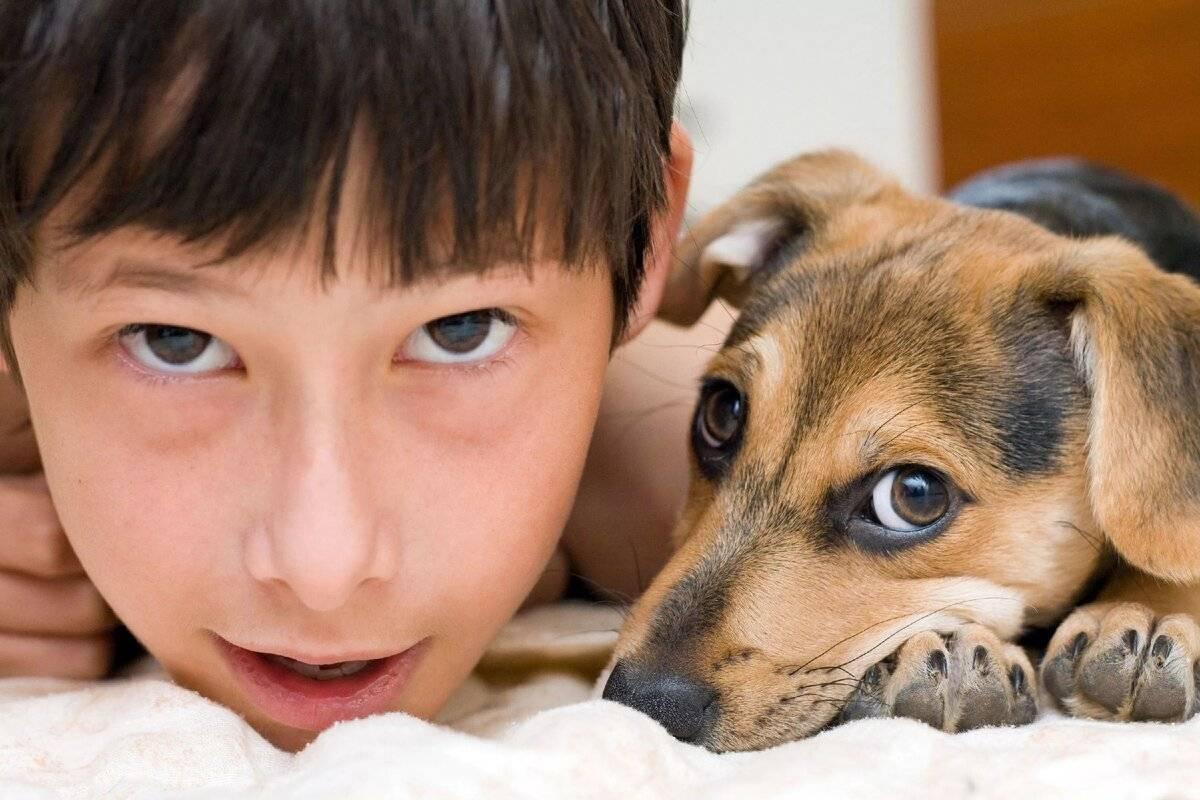 Как уговорить родителей купить собаку и какую породу лучше выбрать