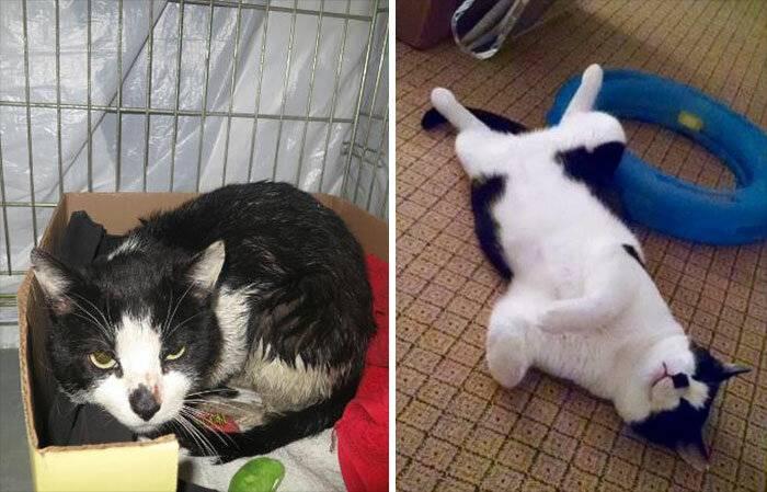 Уличные домики для кошек: выбор, обустройство и установка