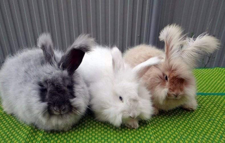 Породы кроликов - какую выбрать, лучшие неприхотливые, мясные, декоративные породы