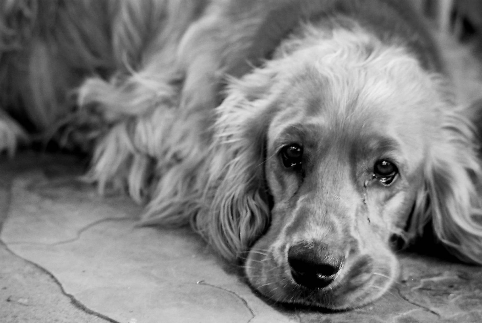 Почему моя собака скулит и плачет в машине? - советы для домашних животных 2020