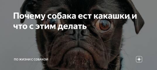 Что делать, если собака ест экскременты