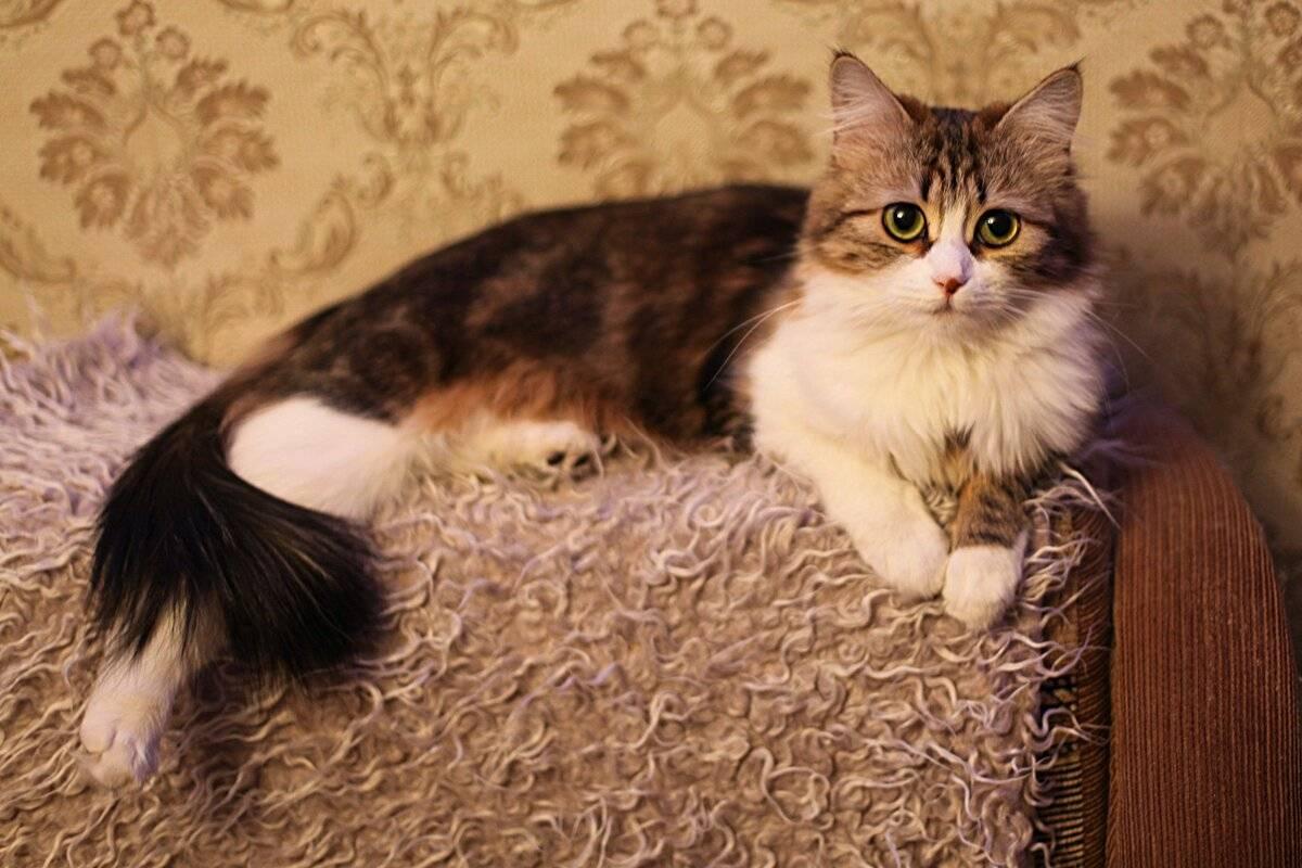 Психология кошек: полезная информация о поведении