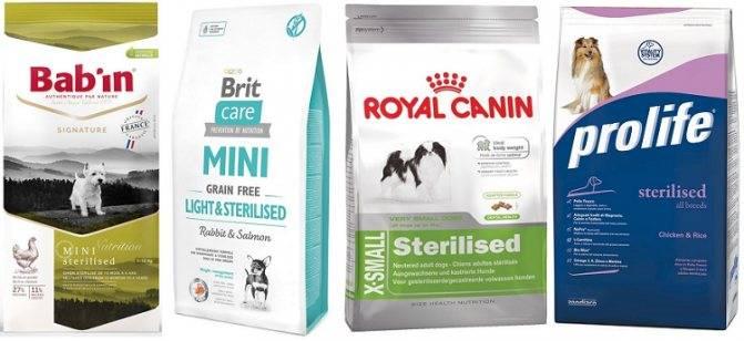 Какой корм для собак лучше: виды и классы кормов, различия в составе, особенности кормов по размеру собаки, топ-15 марок кормов