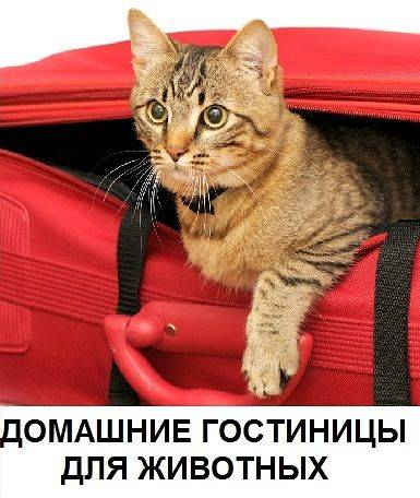 Где оставить кошку на время отпуска?