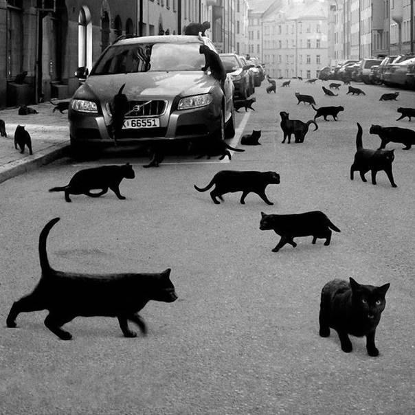 Приметы про черного кота в доме: хорошо или плохо, что означает