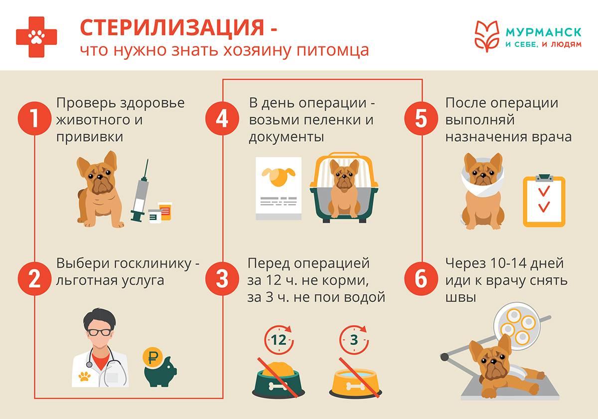 Какие прививки делать котятам