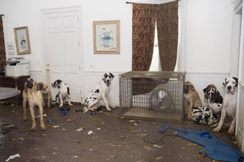 Сколько в среднем живут собаки?