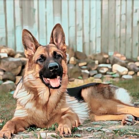 Сторожевые породы собак с фото и названиями