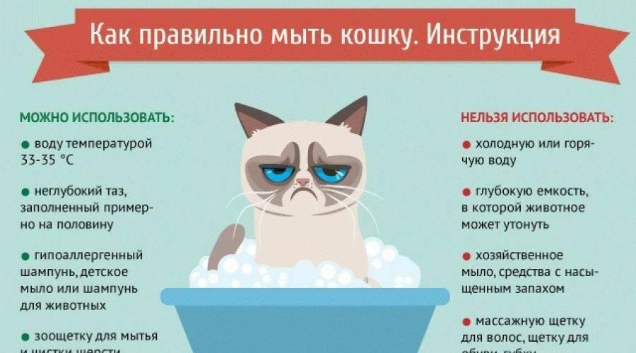 Самоедская лайка: уход за собакой, содержание в квартире и во дворе, правильное питание, гигиенические процедуры и выгул