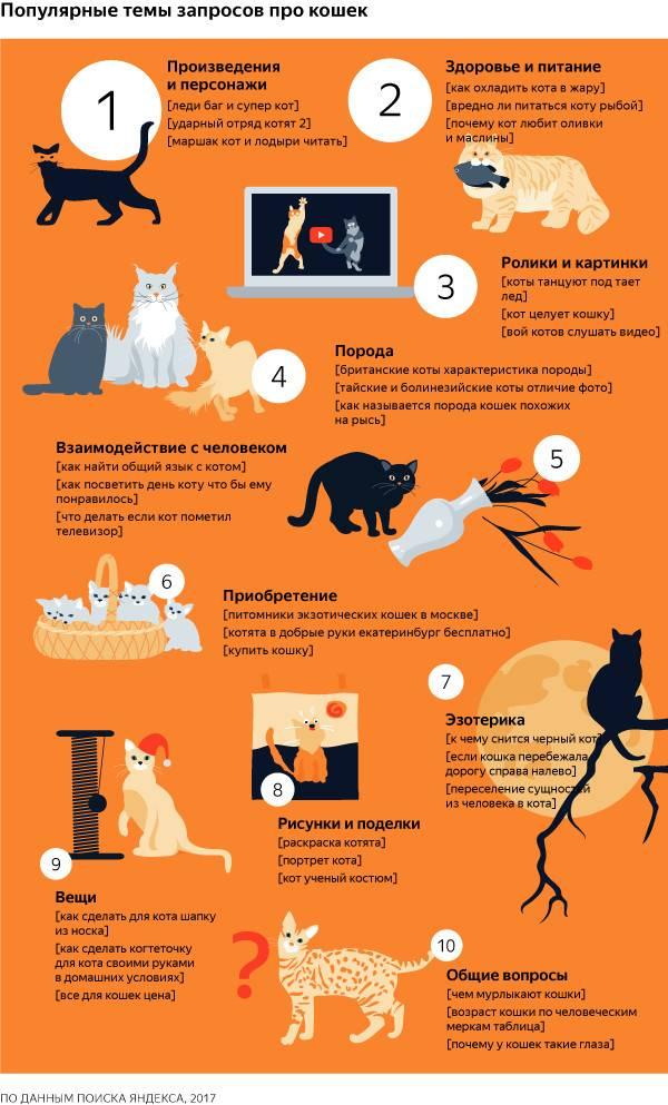 Подобрали котёнка на улице. что делать с подобранным котёнком?