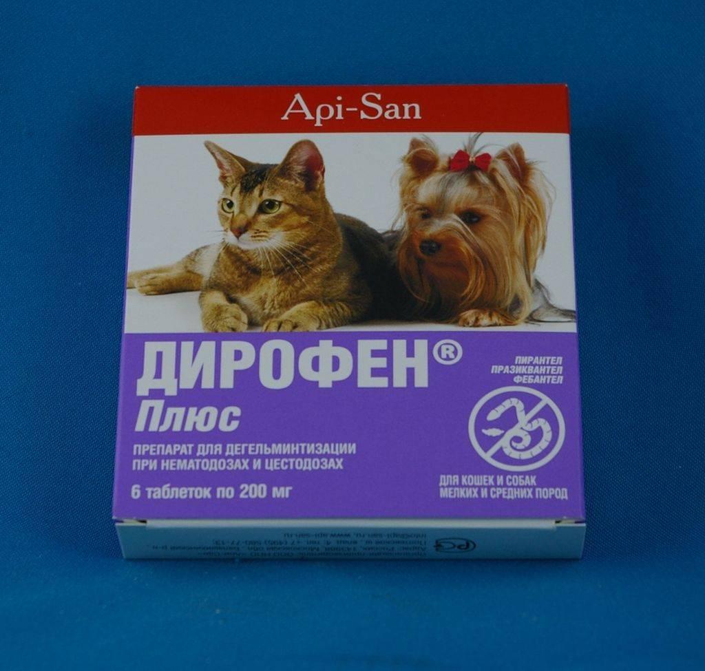 «дирофен плюс»: как давать собаке и кошке