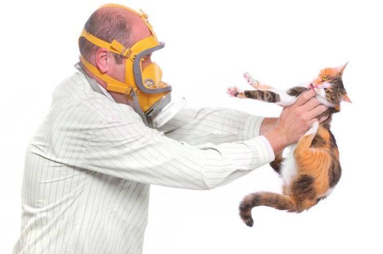 Аллергия на кошек: симптомы и лечение. на каких кошек нет аллергии.