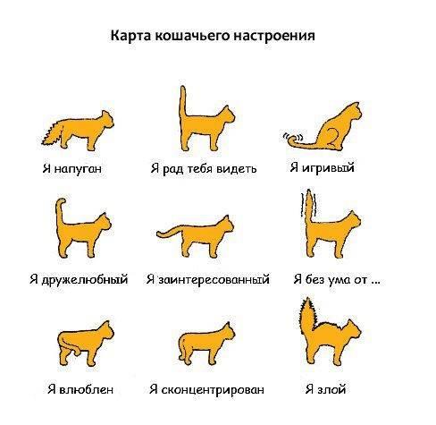 Полосатые породы кошек