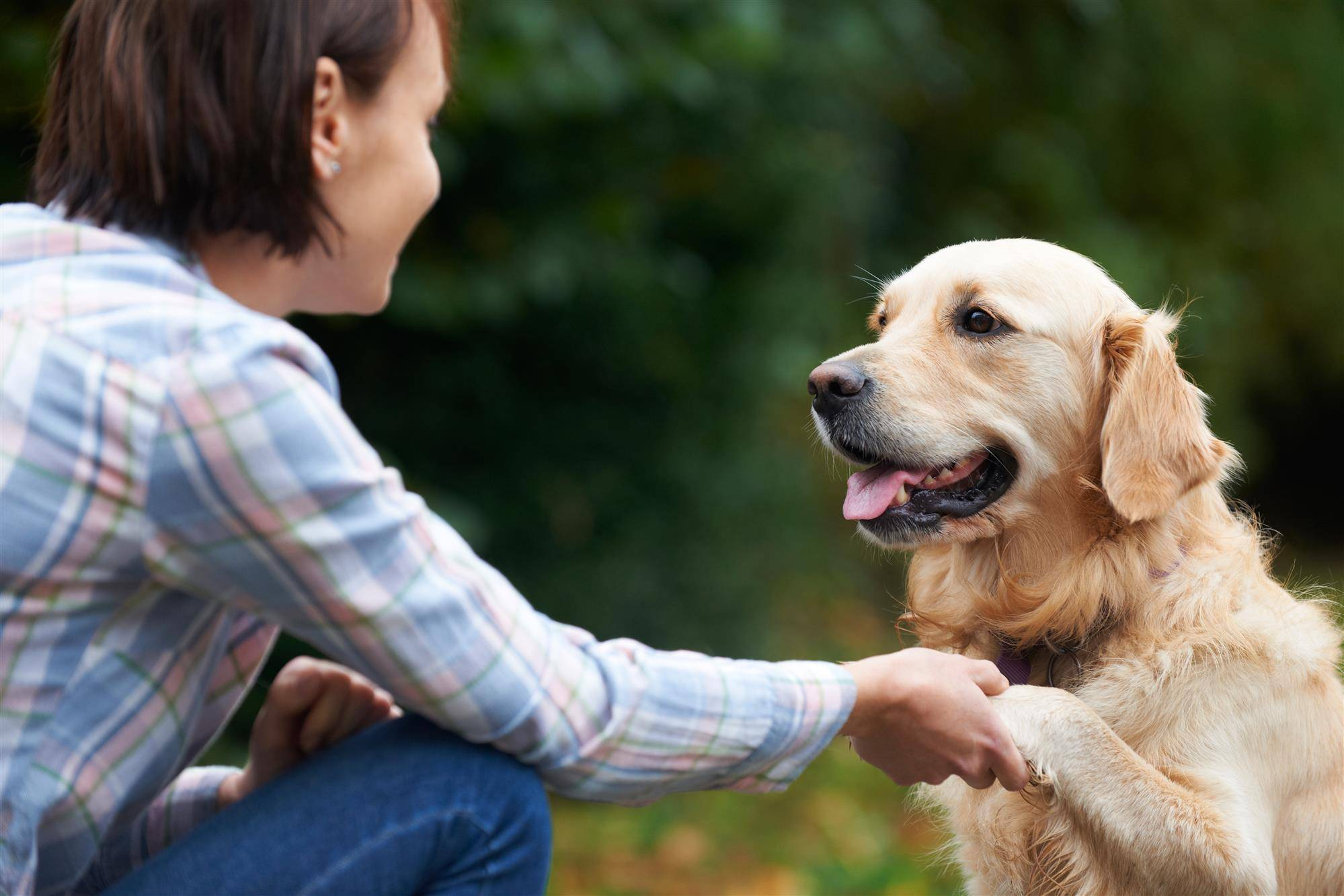 Собаки умеют улыбаться, но почему они это делают: результаты исследования