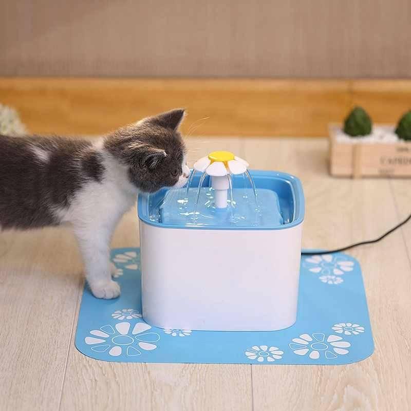 9 причин почему котенок не ест сухой корм и не пьет воду