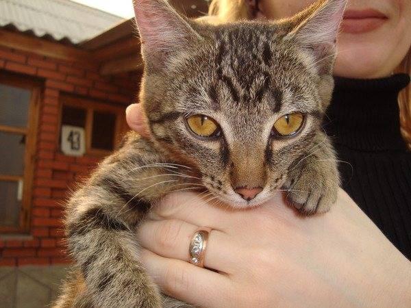 Кошки-крысоловы: лучшие породы   фото, какие коты ловят мышей и крыс